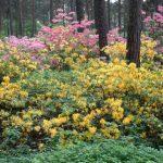 Alppiruusupuisto – der Alpenrosenpark in Helsinki ist ein Besuch wert